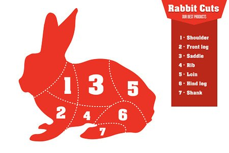 Rabbit cuts infographic set of meat parts, vector