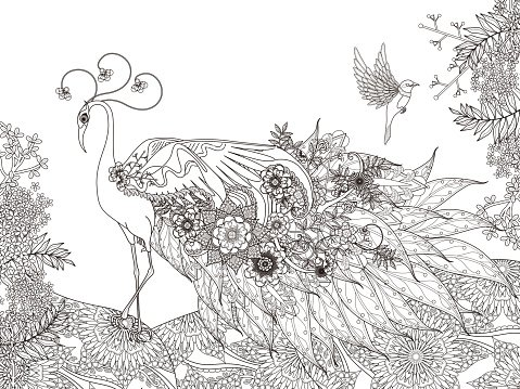 Floral Feather Peacock Coloring Page Clipart Image