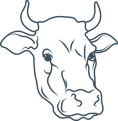 cow cartoon cow cow drawing cow head vector illustration premium