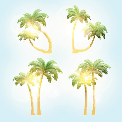 Set Realistic Trees With Patches Of Sunlight Premium Clipart