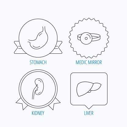 Kidney, liver and stomach organ icons.