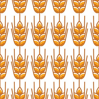 Seamless pattern with wheat. Agricultural image natural ears of barley