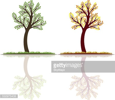 Set, summer and autumn tree vector with reflection