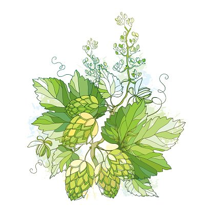 Stem with ornate Hops with cones and leaves in green.