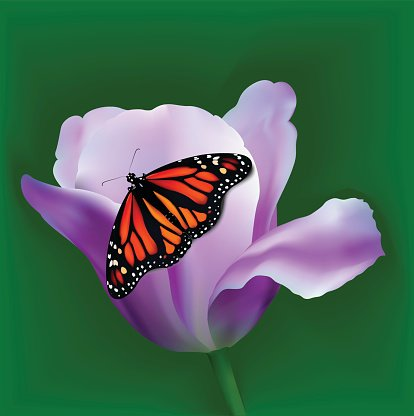 Background with tulip and butterfly