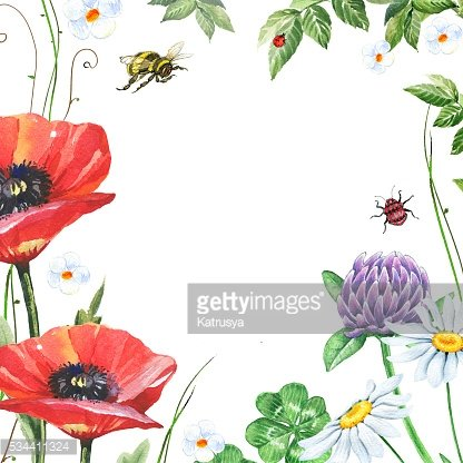 Watercolor floral frame with poppies, chamomiles and clover