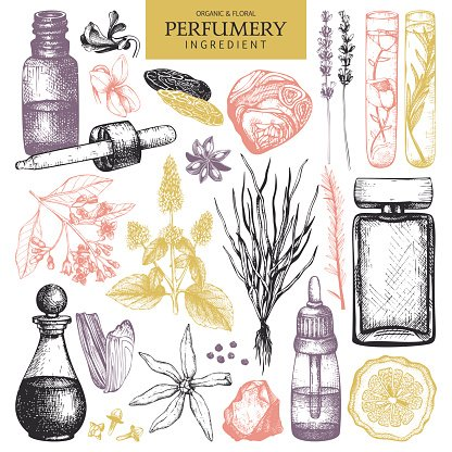 Vector collection of hand drawn perfumes and cosmetics sketch.