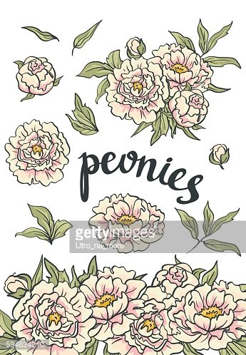 Vector Floral Collection of hand drawn Pink Peonies.