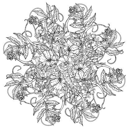 still life coloring book antistress style