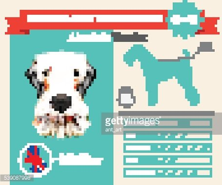 Airedale Terrier Dog breed vector infographics.