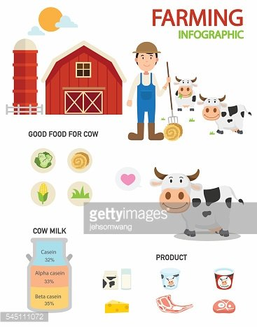 Cow farm infographics,illustration