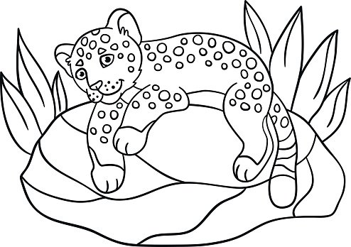 Coloring Little Cute Baby Jaguar On The Premium Clipart