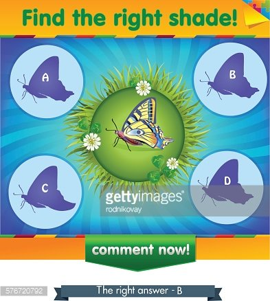 find right shadow butterfly