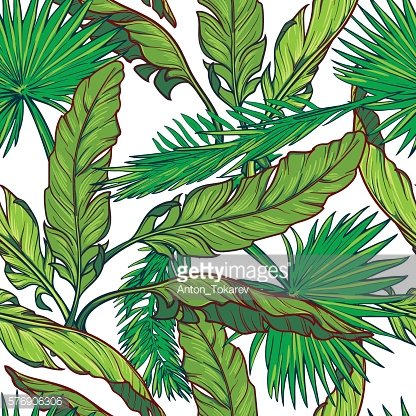 Banana and palm tree leaves on white background