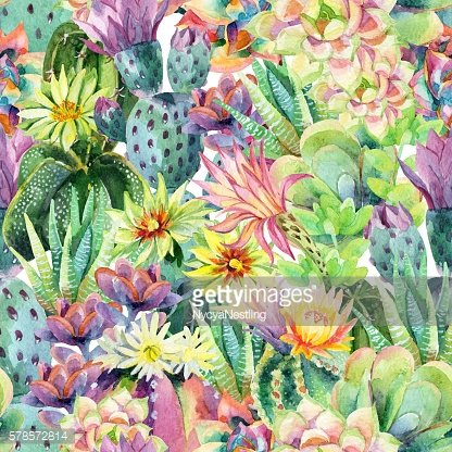 Watercolor blooming cactus background