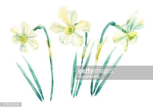 Daffodil watercolor painting set isolated on white background.