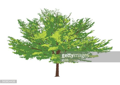isolated green tree. vector logo design. natural plant sign