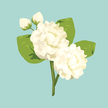 Simple Jasmine Flower In Hand Drawn, Flower, Jasmine, Flowers PNG  Transparent Clipart Image and PSD File for Free Download