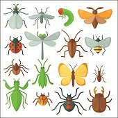 Set of various insects: butterfly, fly, beetle, dragonfly, spider, bee