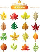 Leaves vector icon set for natural, seasonal, ecological design concept.