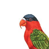 Hand drawn parrot head. Exotic bird isolated on white background.