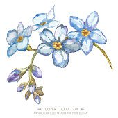 Watercolor flower Forget-me-nots