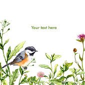 Bird in meadow grass. Watercolor summer greeting card