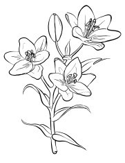 Lilies. Freehand drawing.