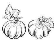 Pumpkins. Freehand drawing.