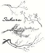 Sketch branch sakura flowers vector illustration.