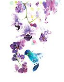 Orchids tropical flowers with hummingbird watercolor painting illustration handmade isolated