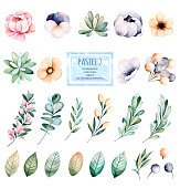 Foral pastel collection with flower,roses,leaves,branches,succulents,eucalyptus