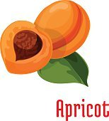Apricot. Fresh juicy fruit icon