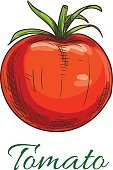 Tomato fruit vegetable icon