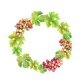Wreath border with grape and  leaves. Watercolor circle frame