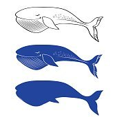 Whale cute cartoon funny illustration isolated on white background