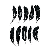 Feathers Vector Illustration