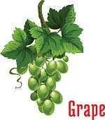 White grape fruit botanical icon