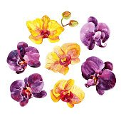 Watercolor Orchid flowers set