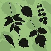 Silhouette of leaves of different species of trees