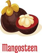 Mangosteen exotic tropical fruit icon