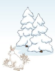 winter bunny in front of snow covered pine trees