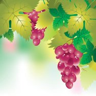 background with a grapes and grape leaves