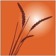 Grass and Wheat Plant Vector Illustration