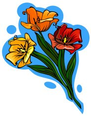 Three different colored vector tulips