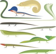Reptile Cartoon Reptiles types set