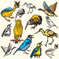 Bird Illustrations IX: Birds  (Vector)