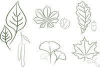 Set of leaf sketch