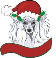 Christmas Poodle Greeting