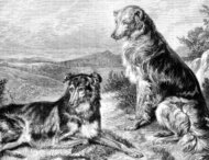 Victorian illustration of two dogs in the countryside